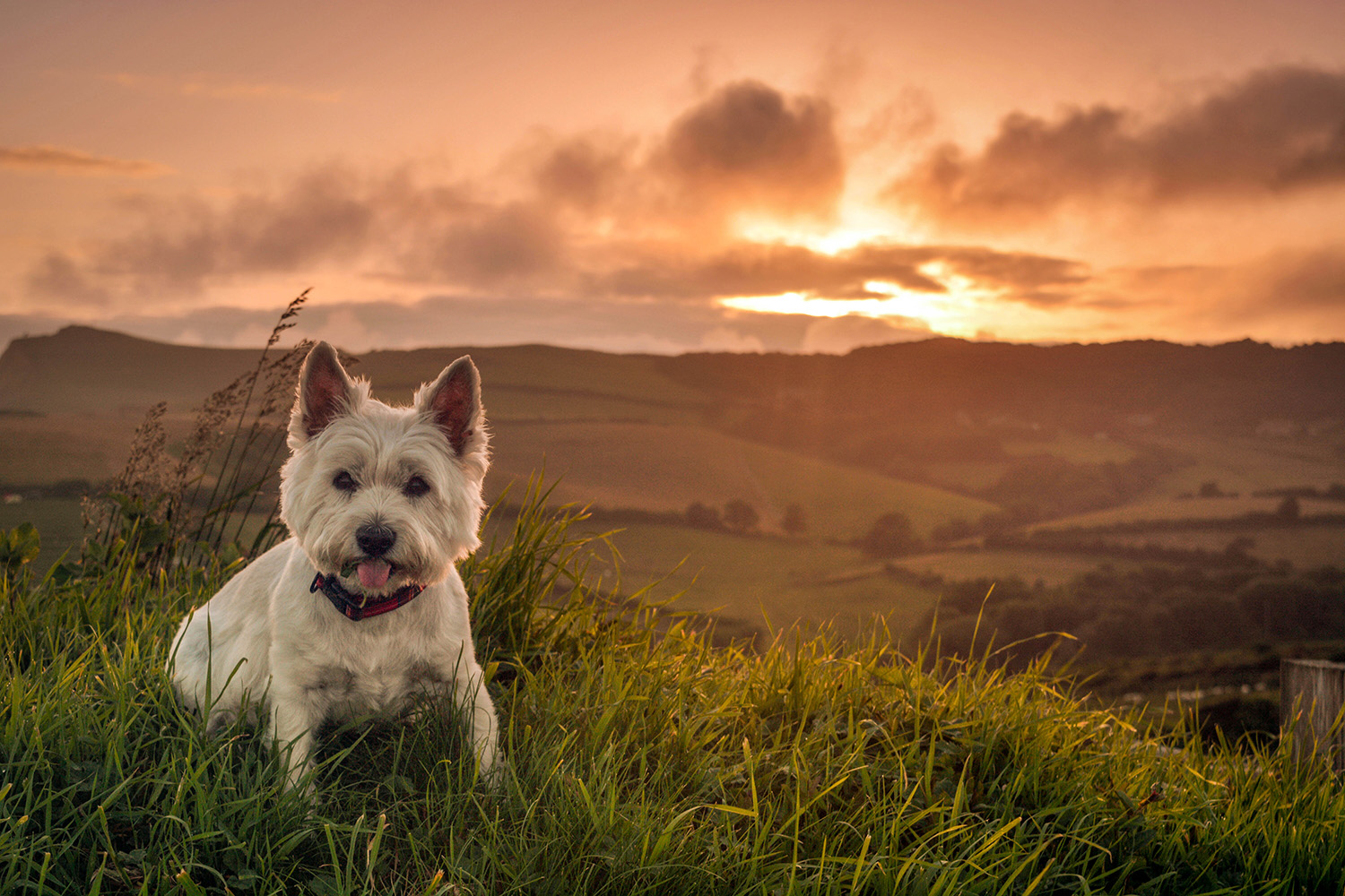 Dog Friendly Holidays in Dorset | West Dorset Leisure Holidays