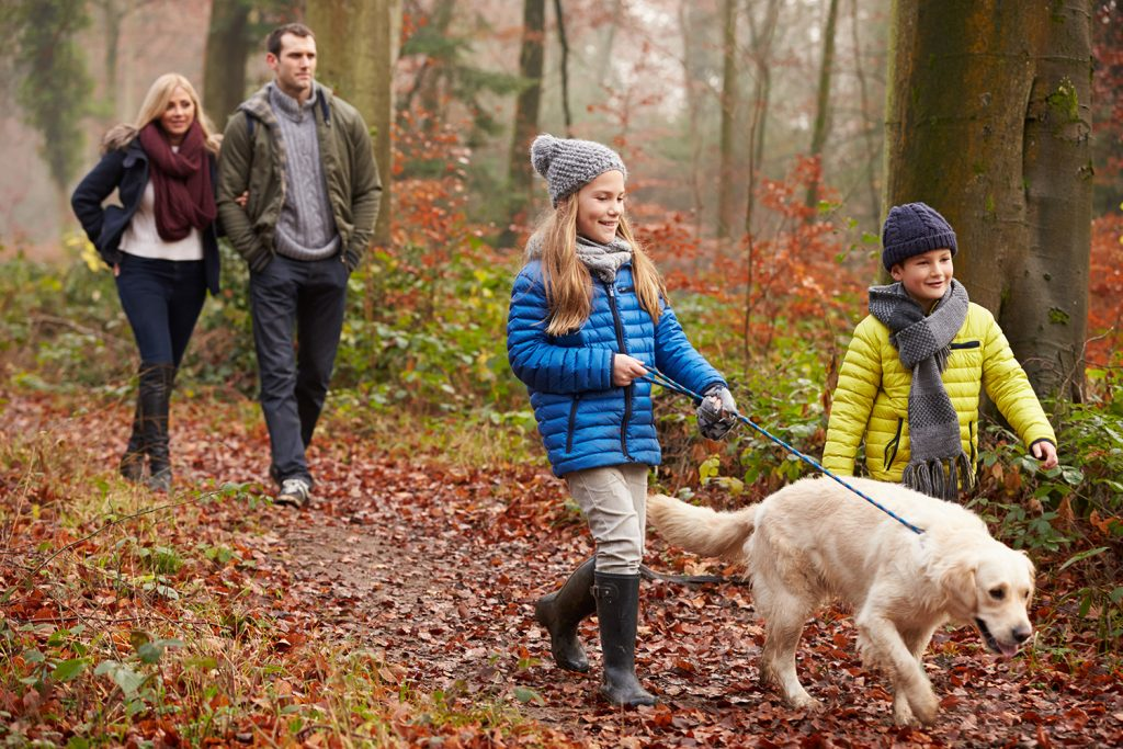 Dog friendly campsites in Dorset
