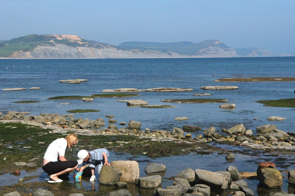 Fossil Hunting in Dorset
