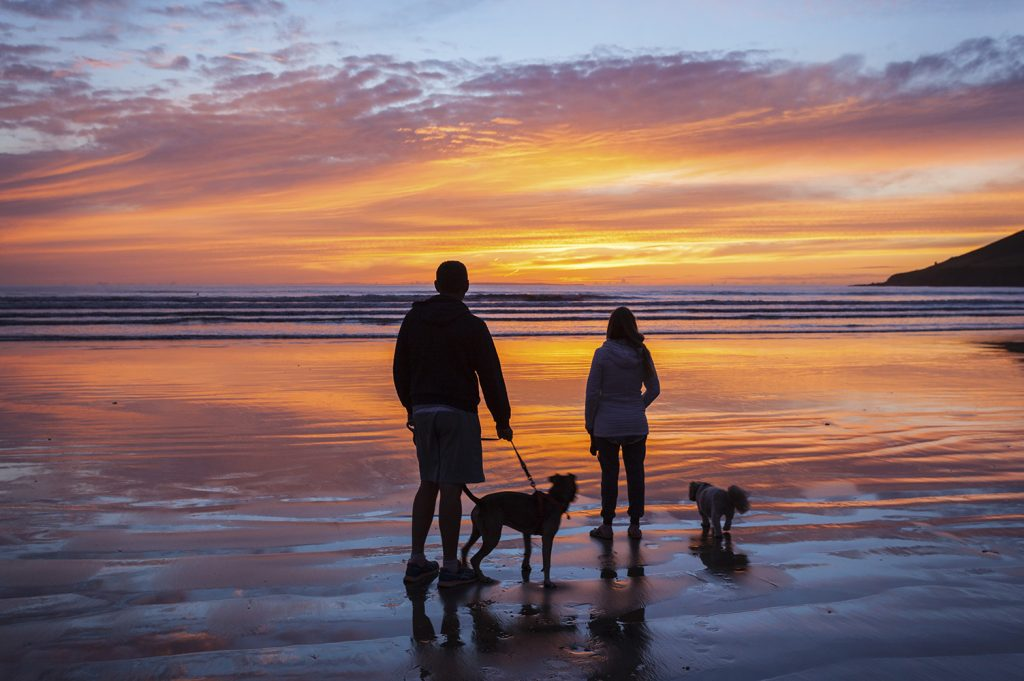 Dog friendly Holiday Parks in Dorset
