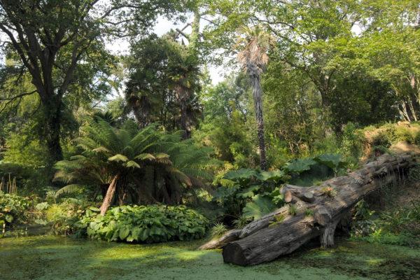 Abbotsbury Sub Tropical Gardens in Dorset
