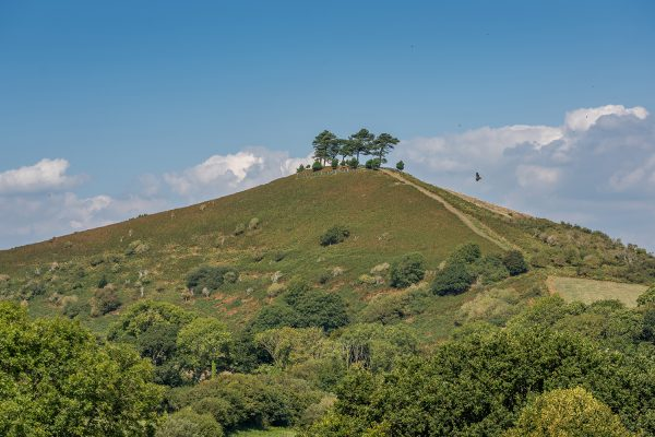 Colmer's Hill in Dorset