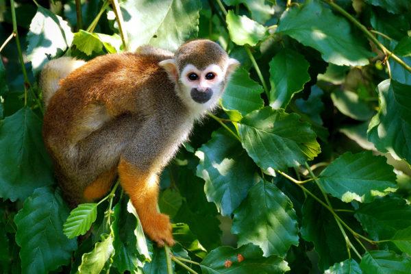 Monkey World in Dorset