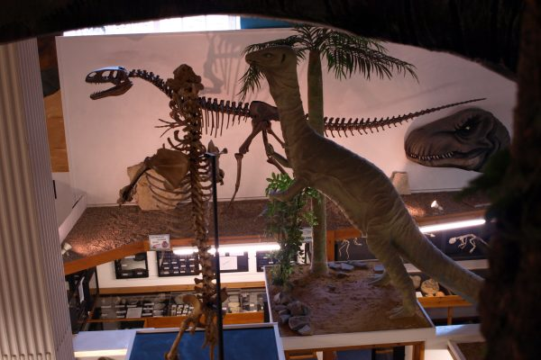 Dinosaurland Fossil Museum - Things to do in Dorset