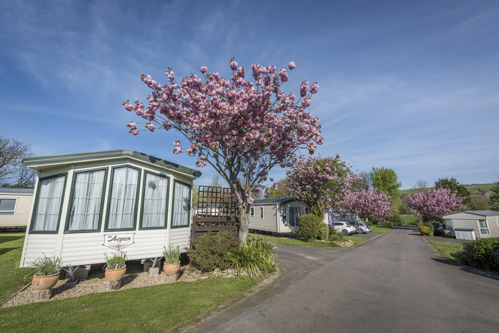 Larkfield Holiday Park in Dorset