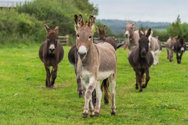 The Donkey Sanctuary - Things to Do on the Jurassic Coast