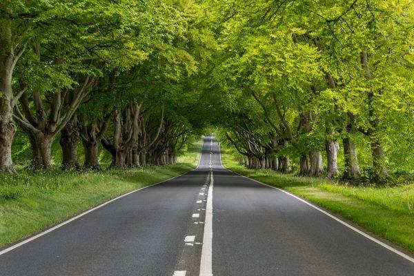 beech tree avenue dorset