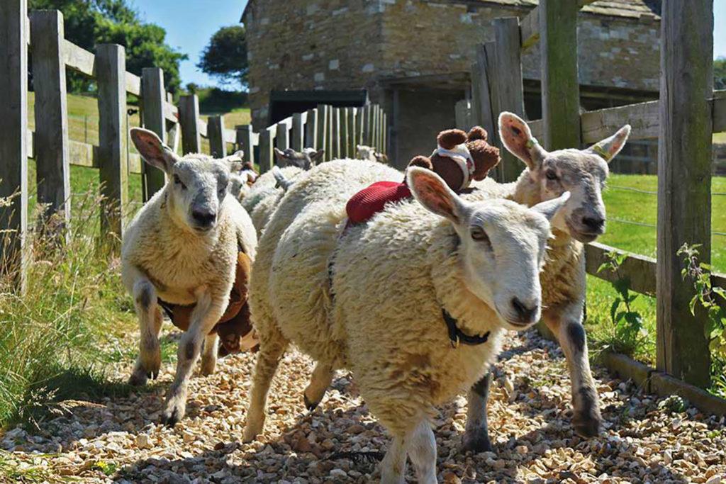 Abbotsbury Children's Farm - Family Friendly attractions in Dorset