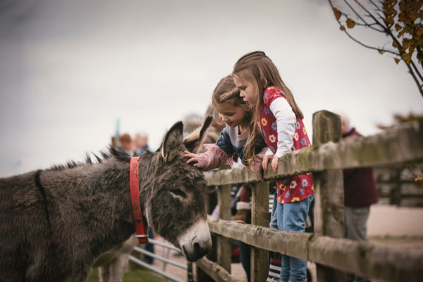 The Donkey Sanctuary - Things to Do on the Jurassic Coast