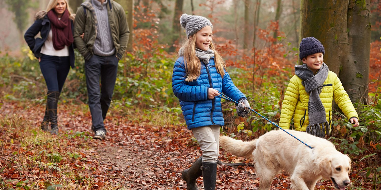 Autumn holidays in Dorset. Walking through the woods.